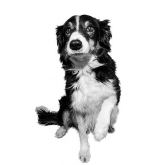 Jake Mehnert Bürohund