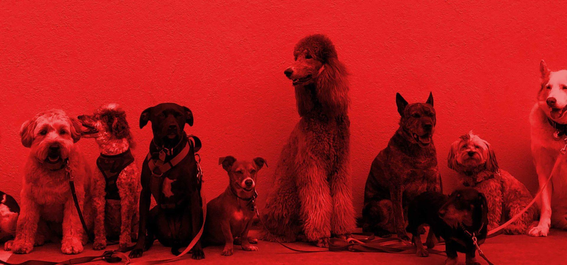 Hunde sitzen vor einer Wand